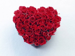 red_rose_heart-4794-300x225